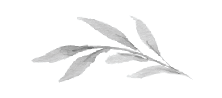 graphic_leaf-01.png