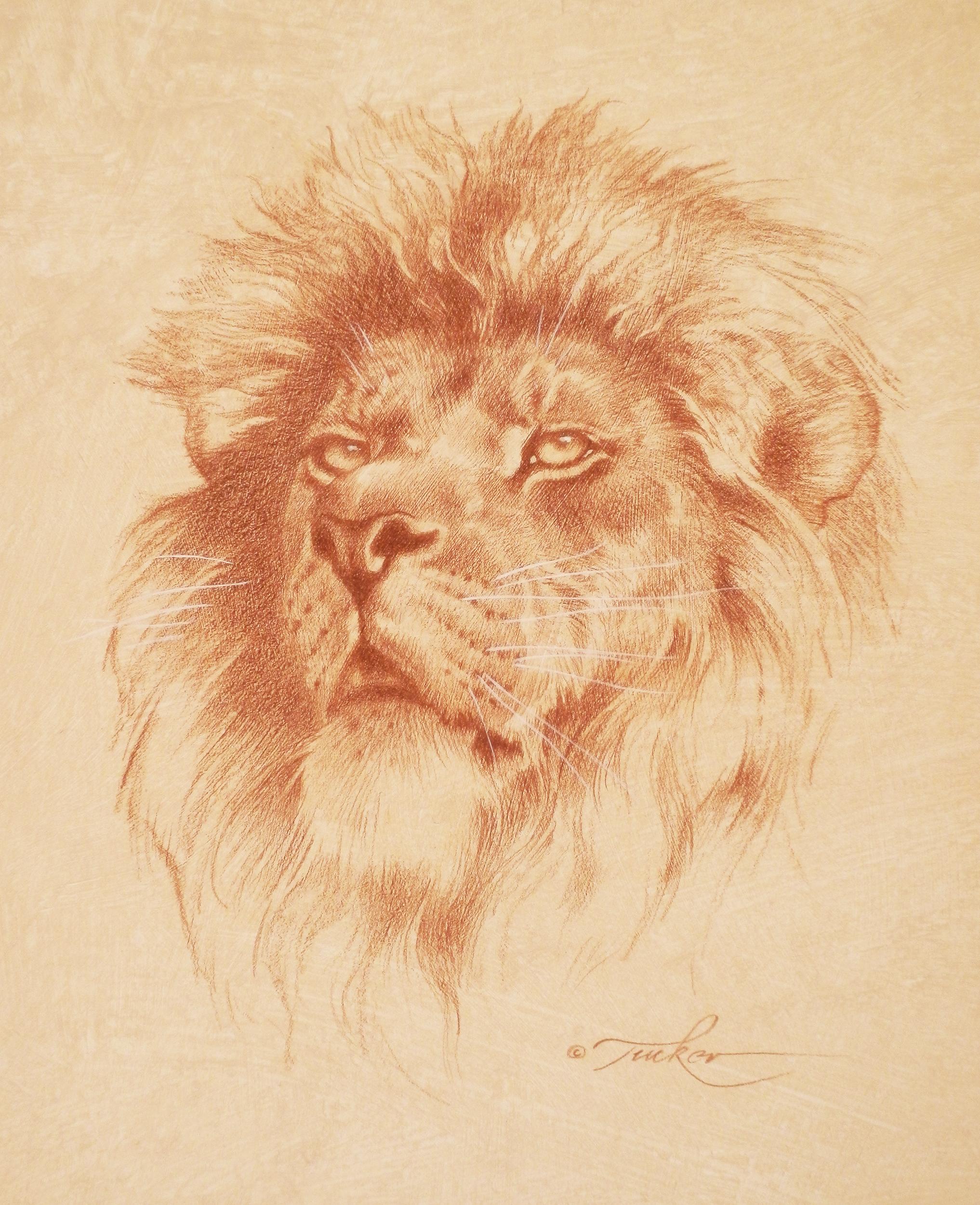 LionDrawing72-2500.jpg