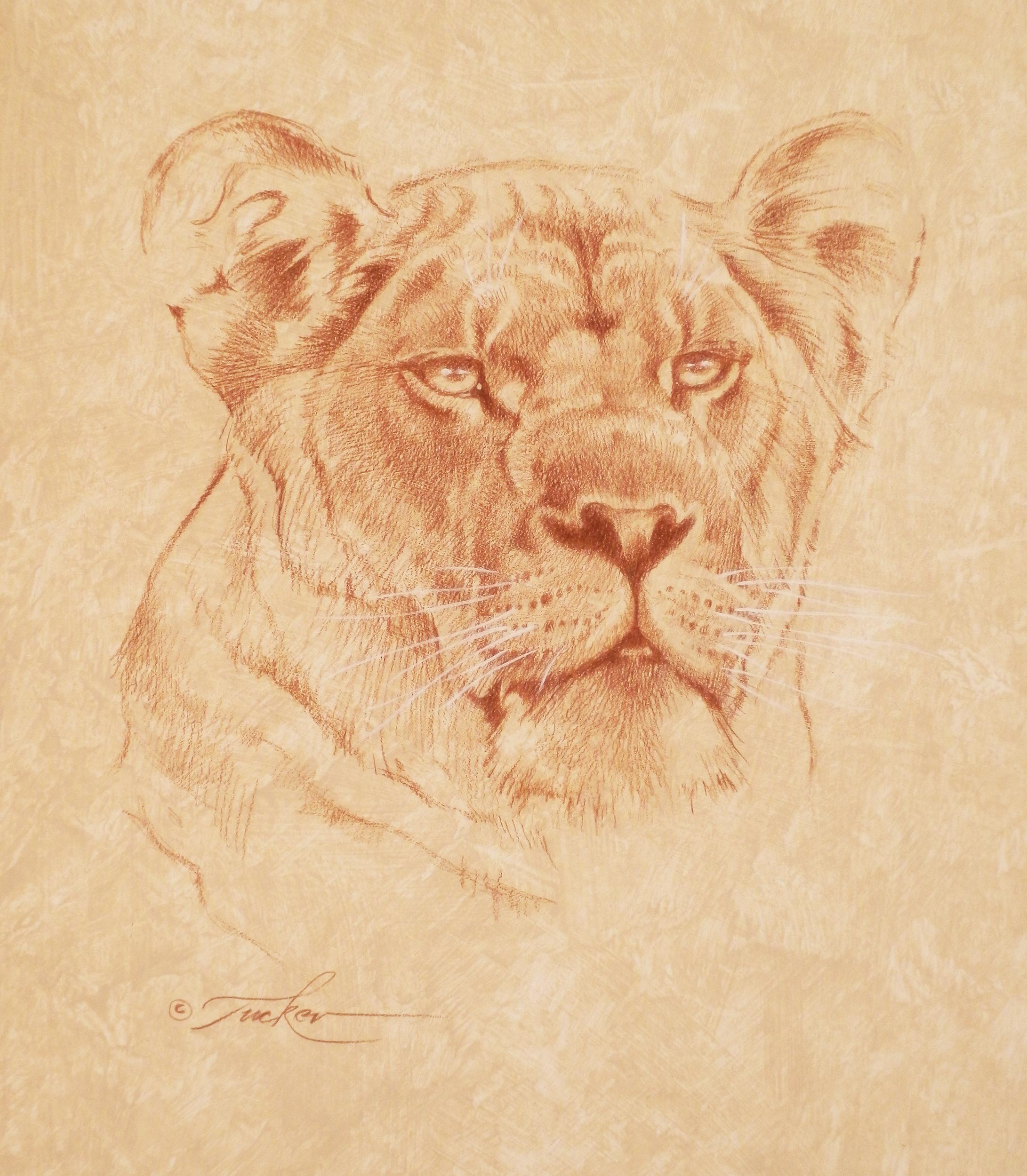 LionessDrawing72-2500.jpg