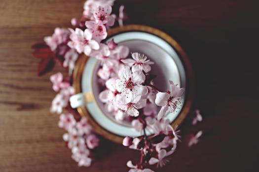 blossom in cup.jpeg