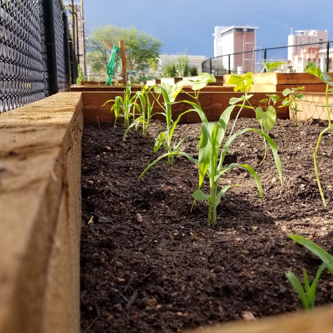 Urban Gardening: - Through urban gardening, Metro Caring's community members have an opportunity to not only learn a new skill but to expand their creativity. We've even turned a freight train into a garden. And we're not done yet.