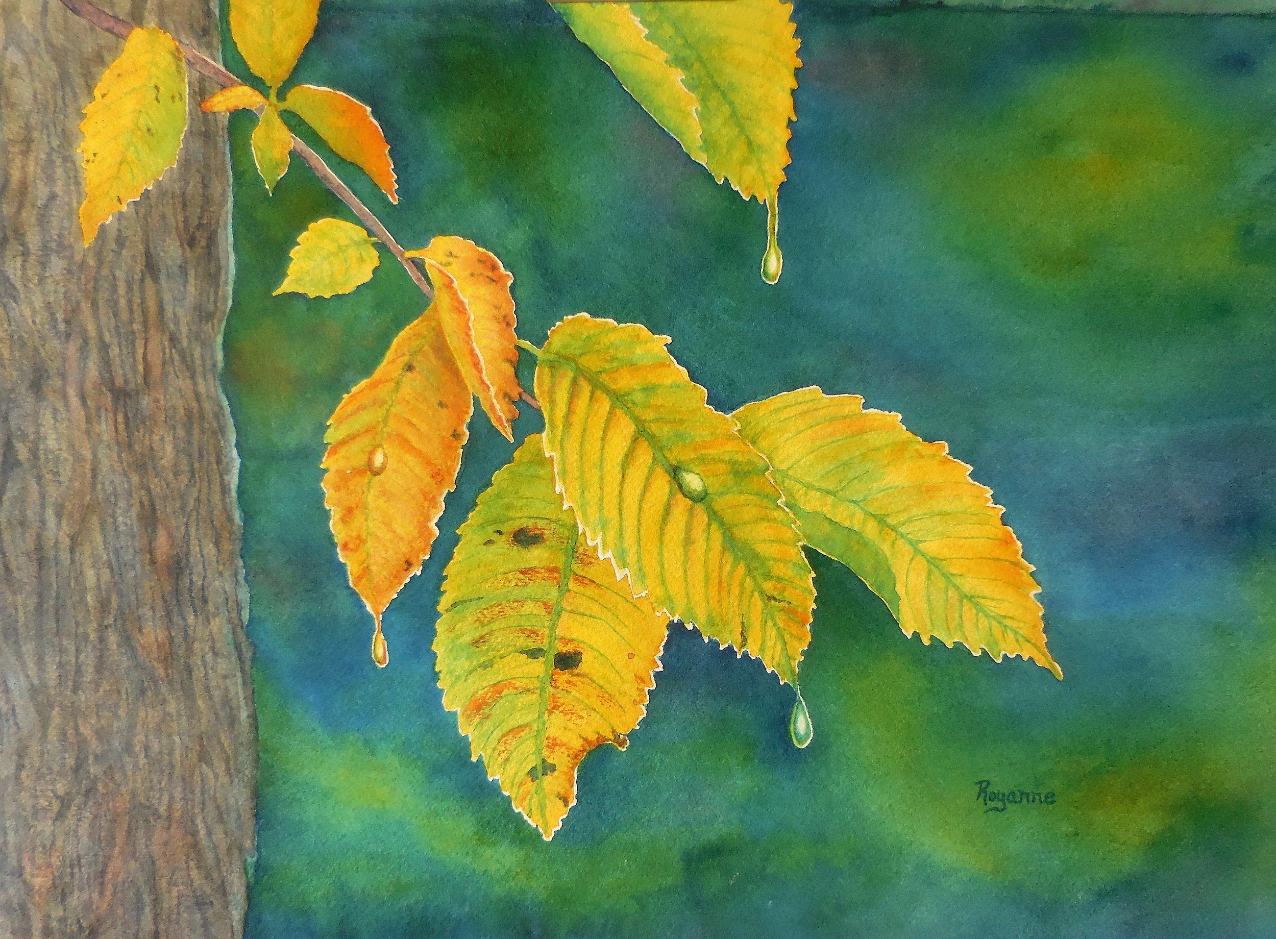Goossen - Elm Leaves.JPG