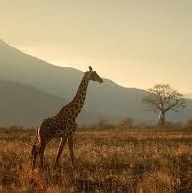 Summer Opportunity in Tanzania - Learn about an amazing summer internship opportunity in TanzaniaRead More →