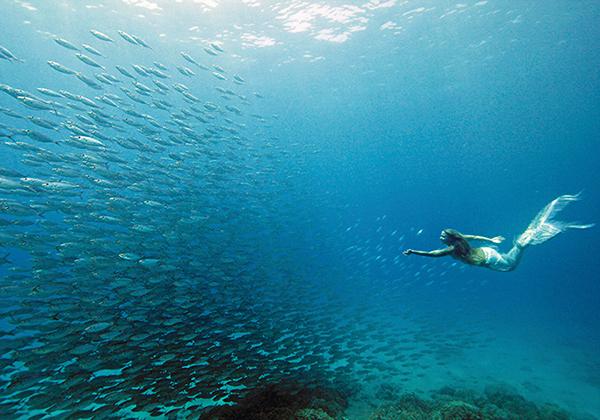 mermaid meet-up- underwater mermaid with fish.jpg