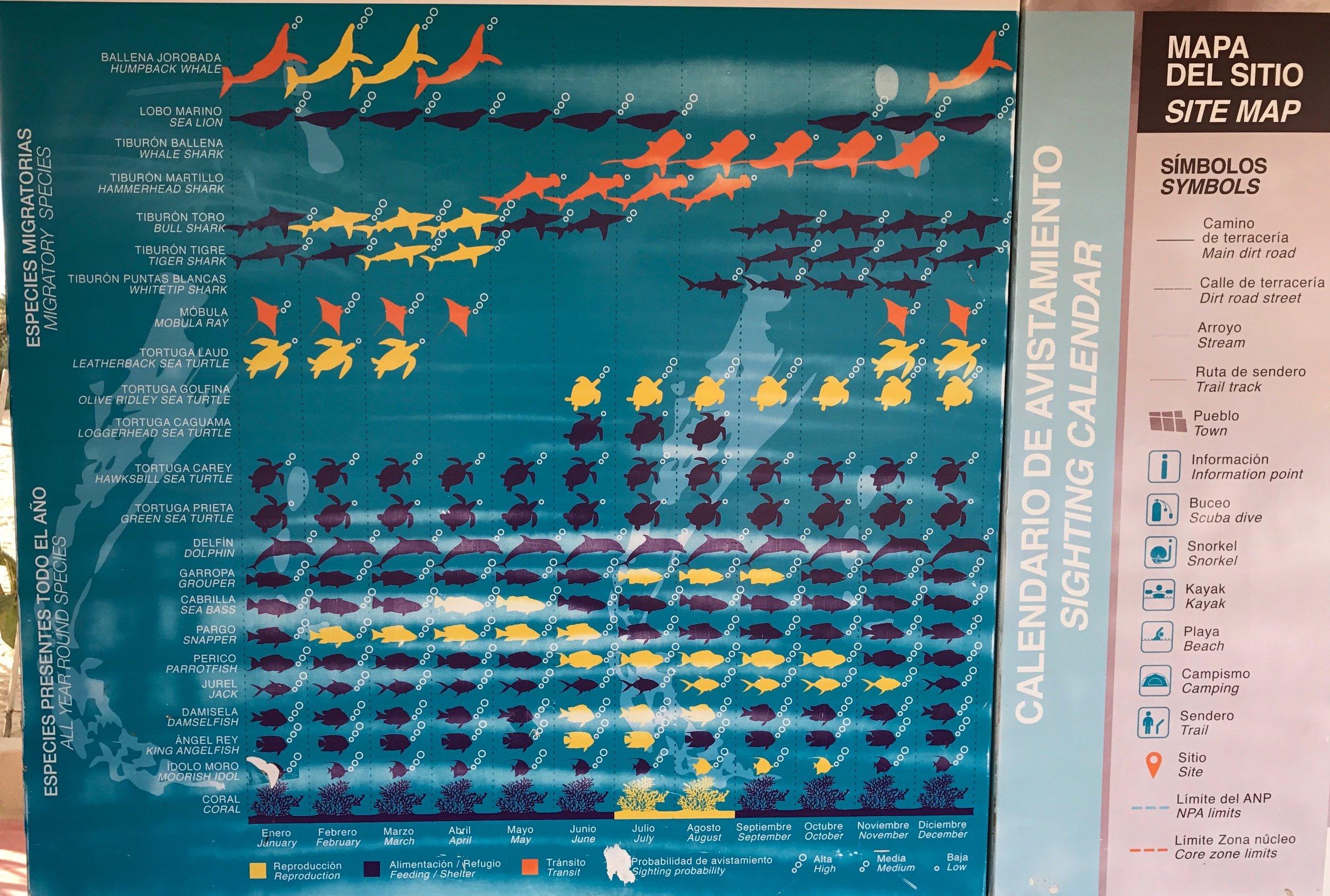 Cabo Pulmo Marine Park info