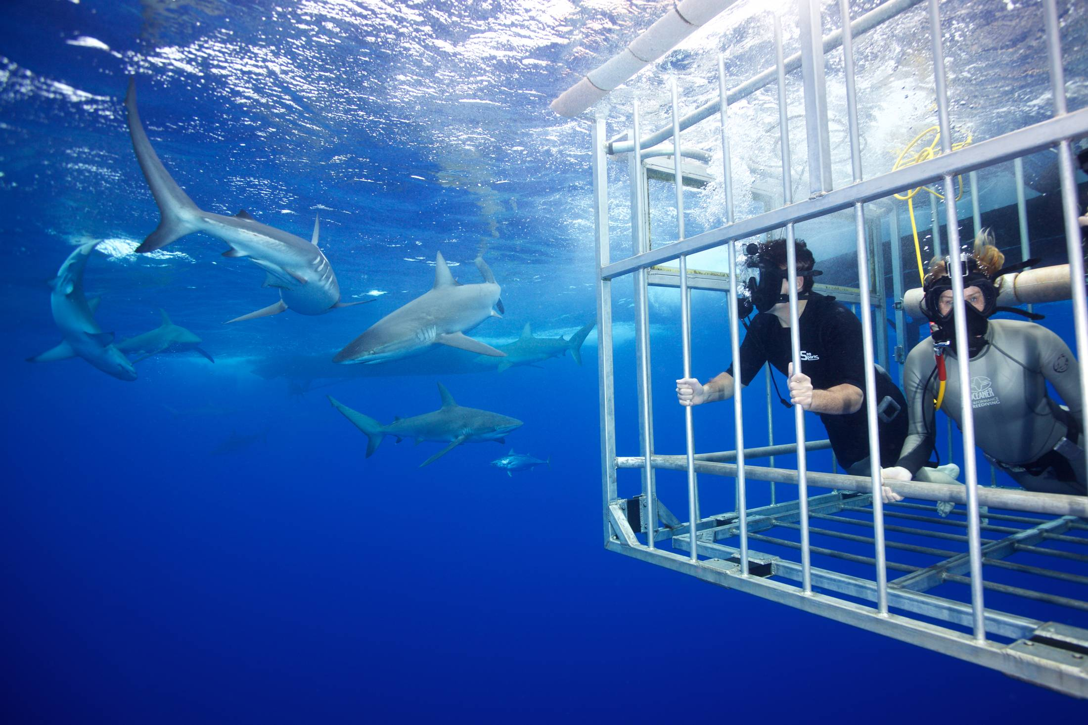 Mark Cuban Shark Week 4.jpeg