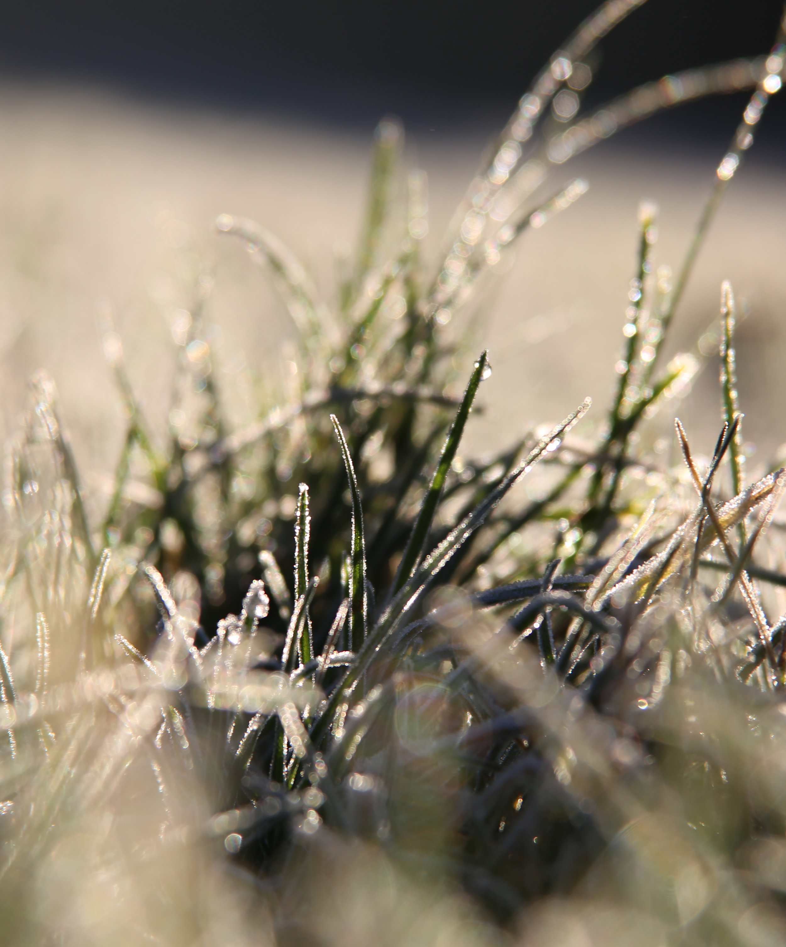 cropped grass.jpg