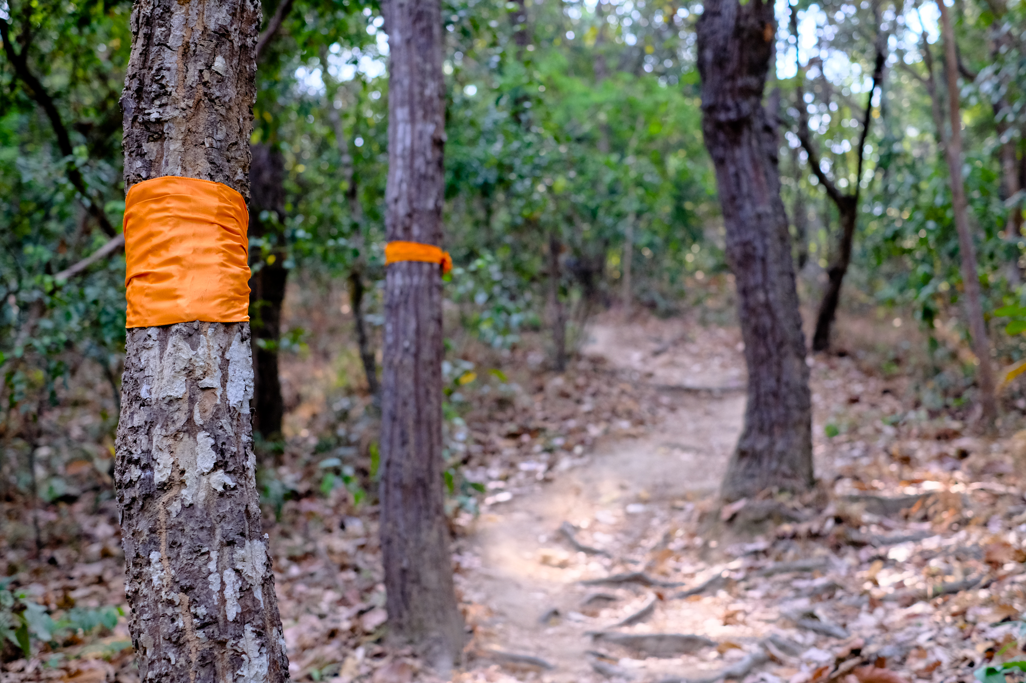 Monks marked the trail with orange bands wrapped around trees