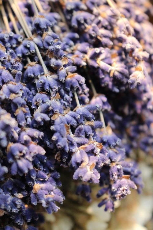 #87 Lavender, Lavandula