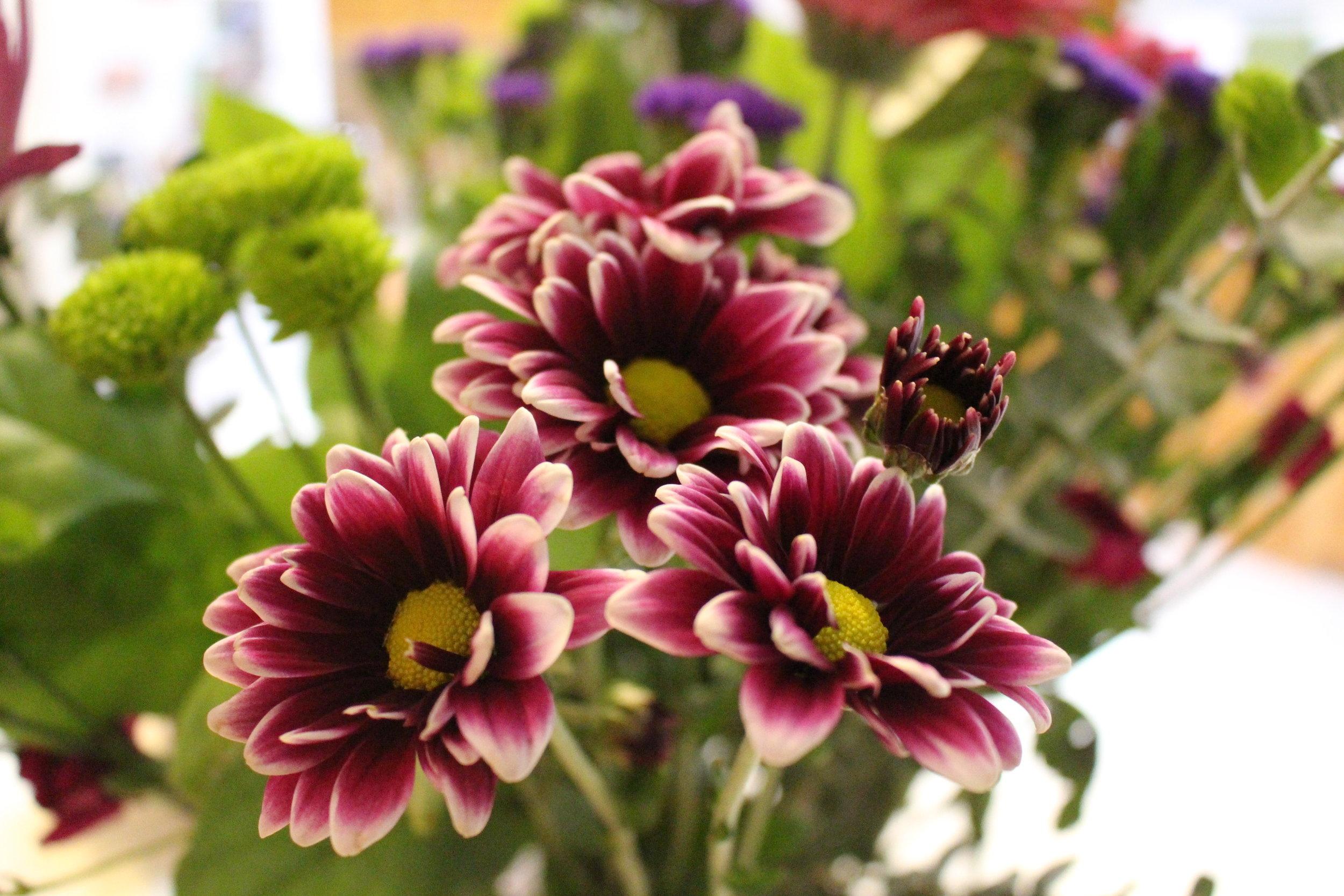 #116 Dahlia,  Asteraceae