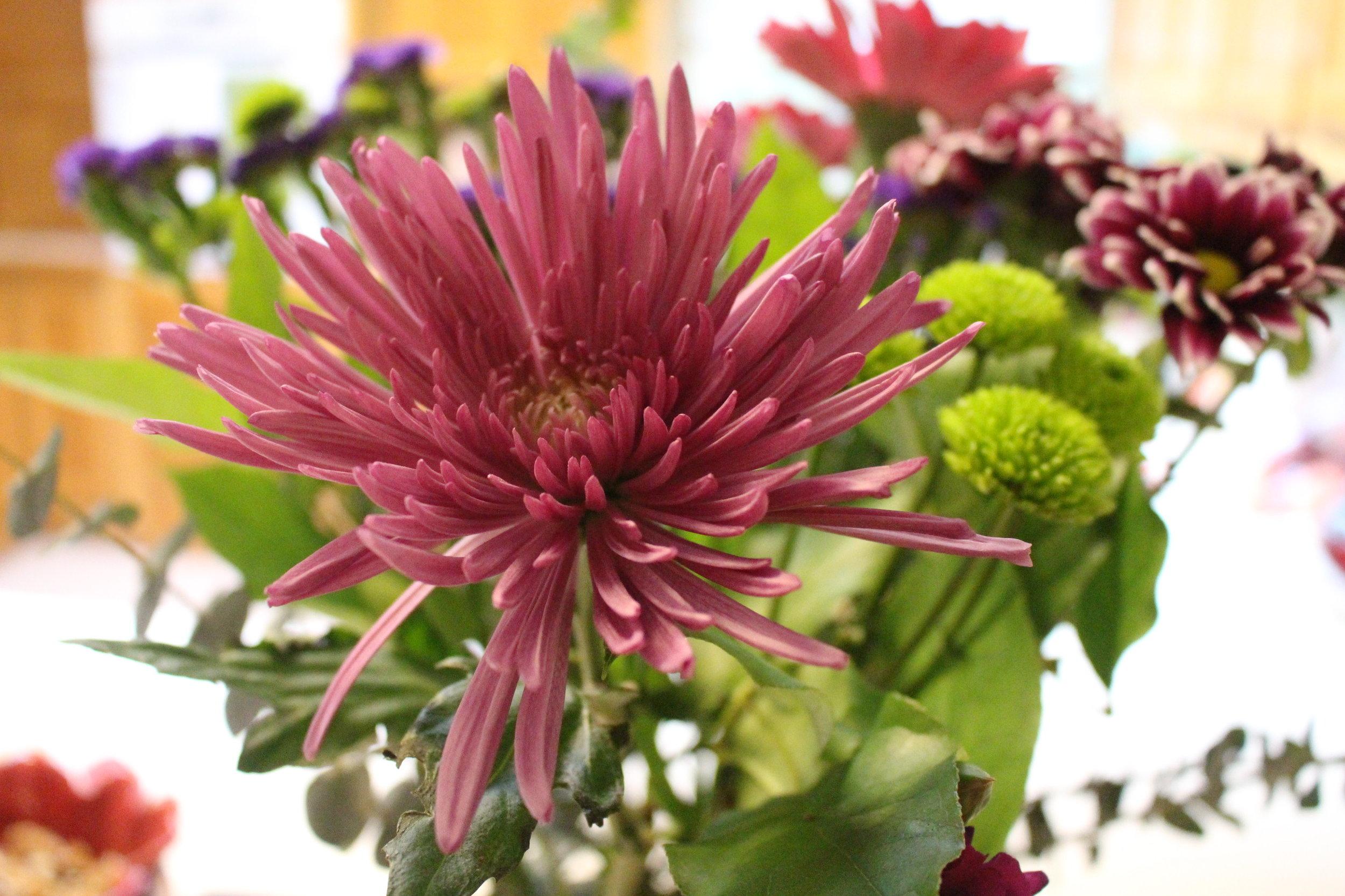 #119 Chrysanthemum,  Chrysanthemum  coronarium