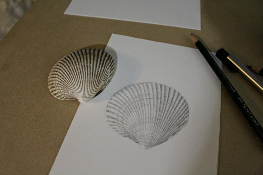 shellinprogress1.jpg