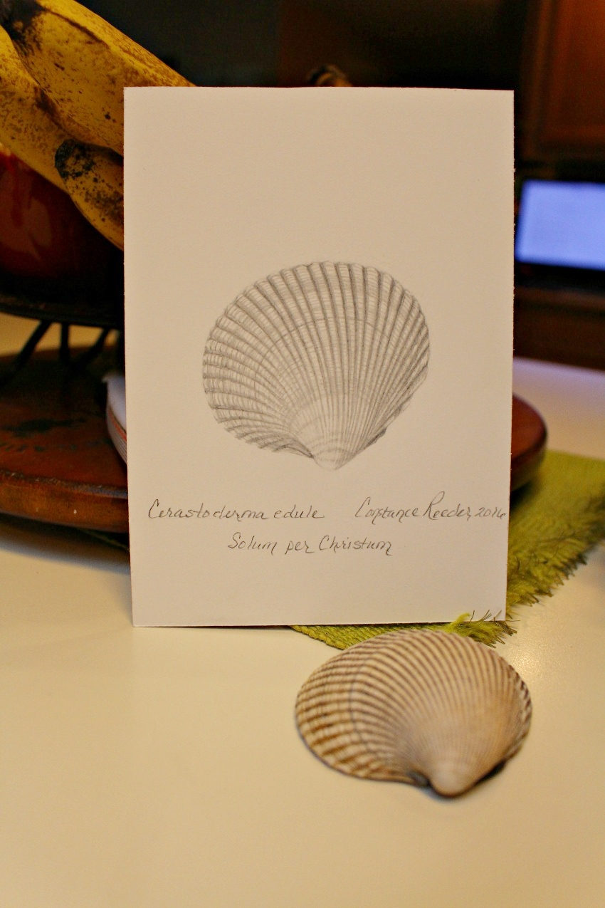 shells1.jpg