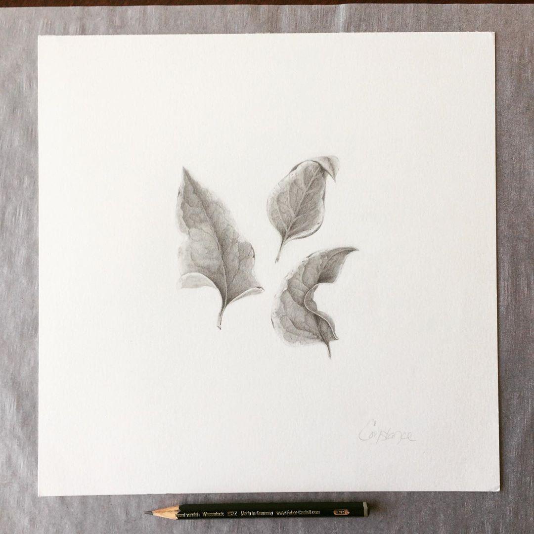Ivy Composition, Graphite on Bristol, 10x10, ConstanceReeder.Com