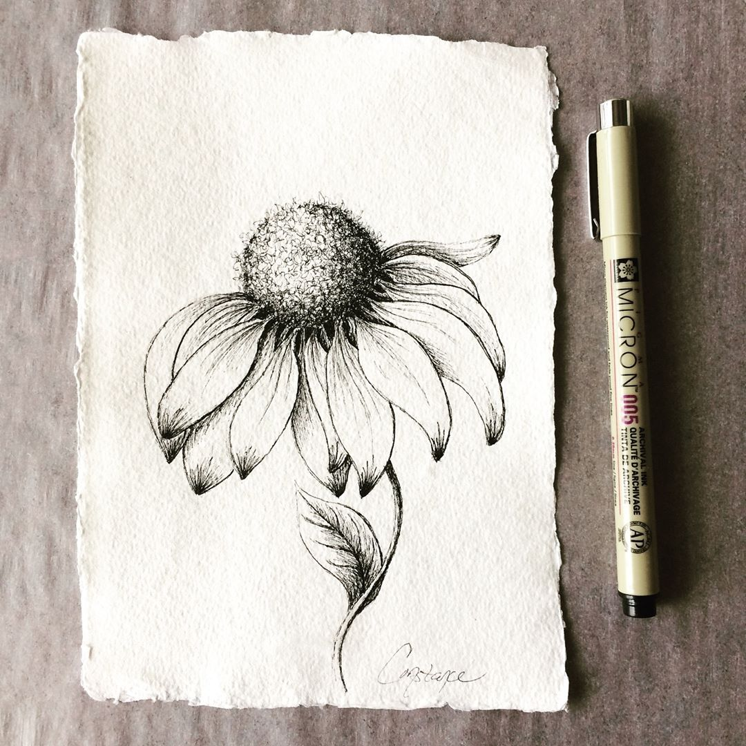 Inky Coneflower on Handmade Paper, 5x7, ConstanceReeder.Com
