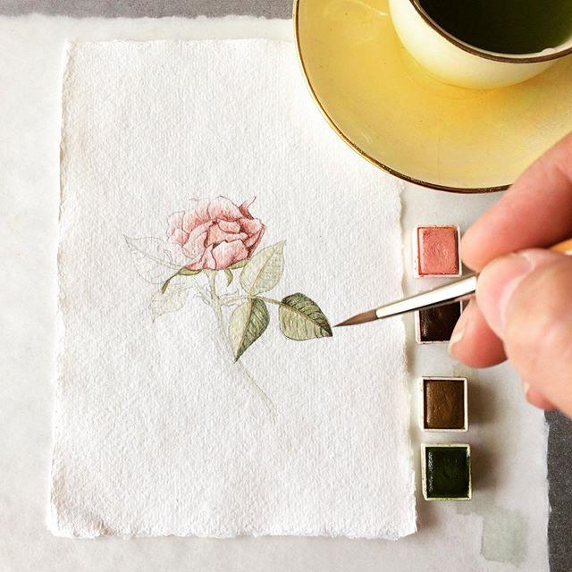 ConstanceReeder.Com - Dry Brush Detail Work on The Lovely Fairy Miniature Rose.