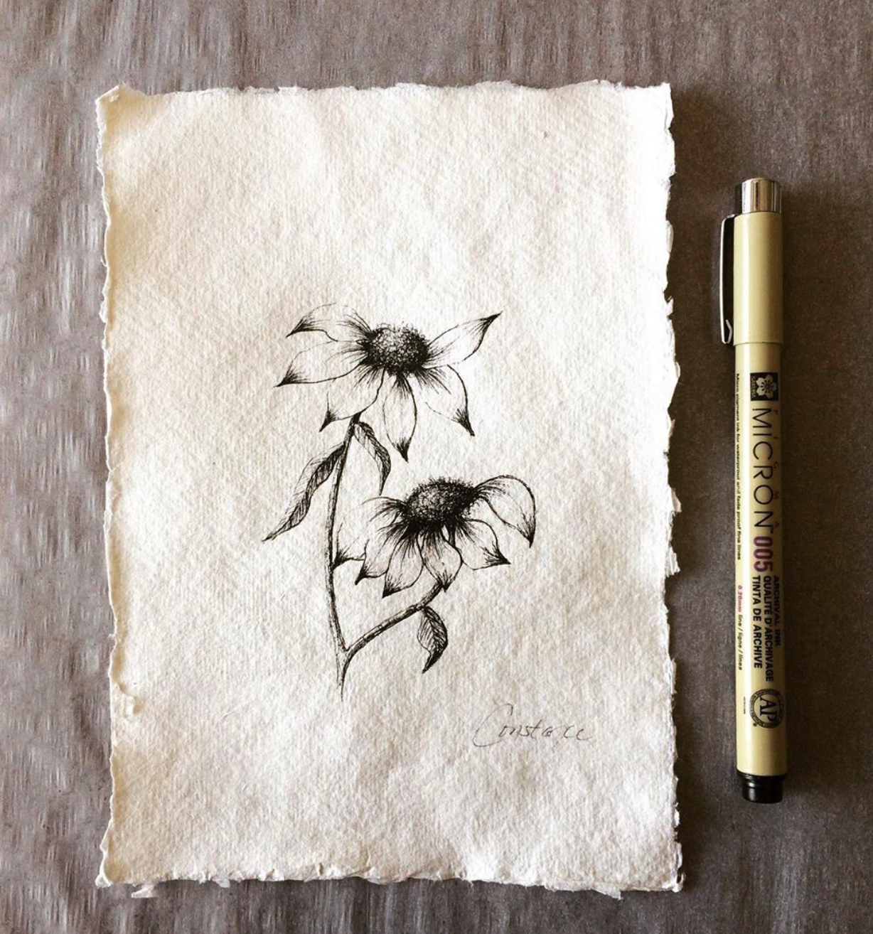 Two Inky Coneflowers Facing Right on Handmade Paper, 5x7, ConstanceReeder.Com