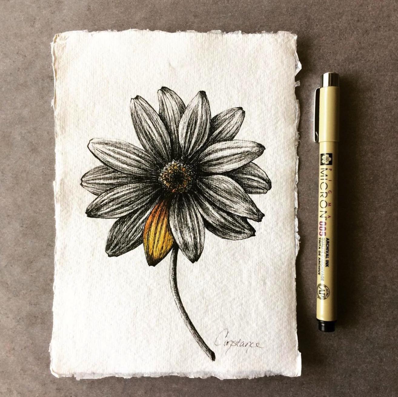 Yellowish Daisy In Black Ink on Handmade Paper, 5x7, ConstanceReeder.Com