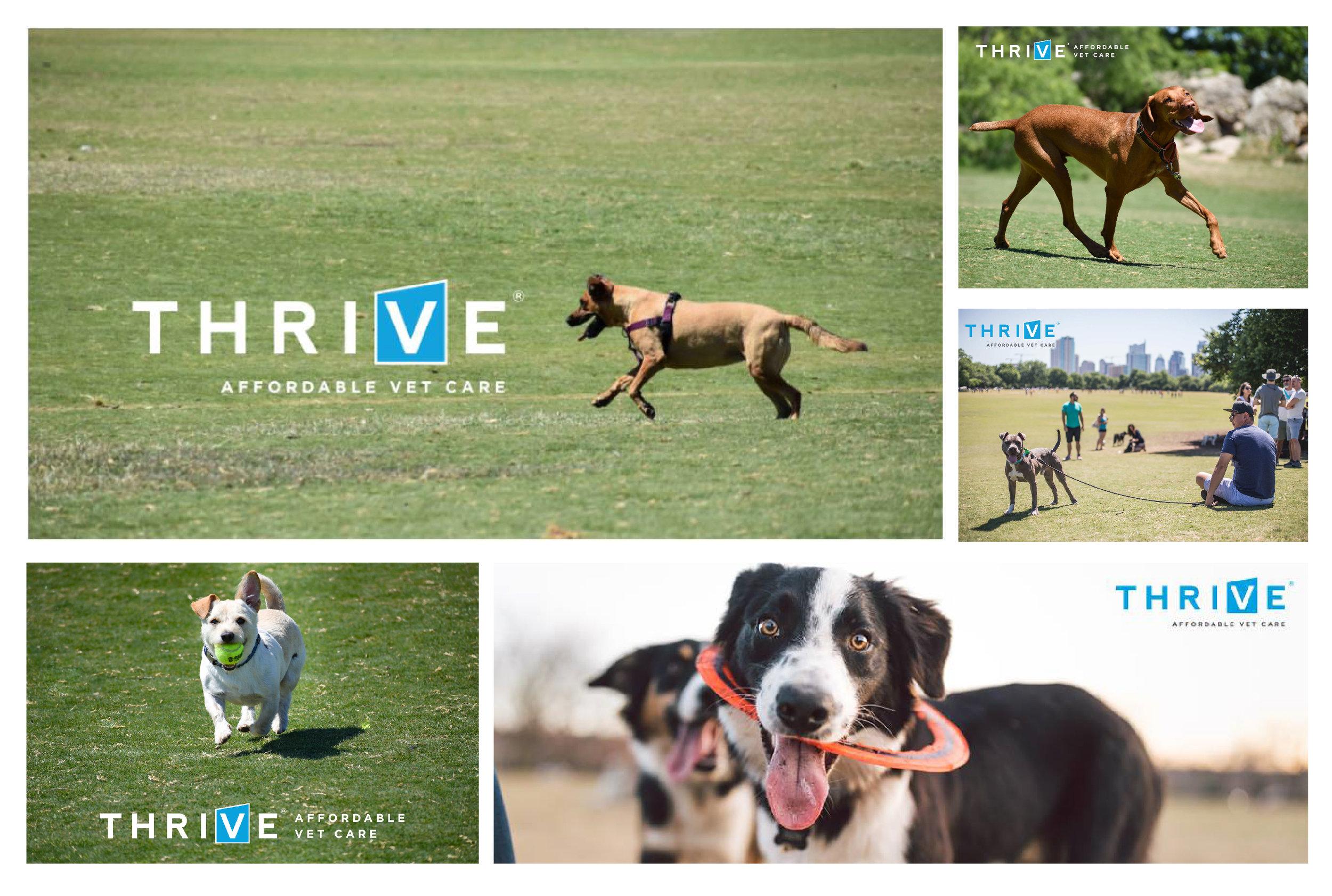 Thrive-photos-01.jpg