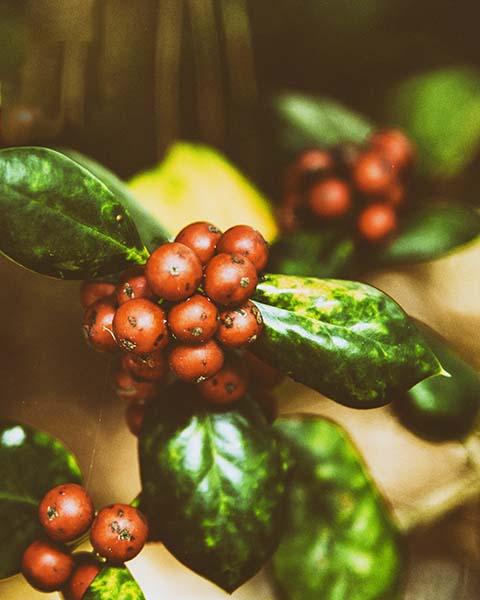 New_Web_Botanicals_003.jpg