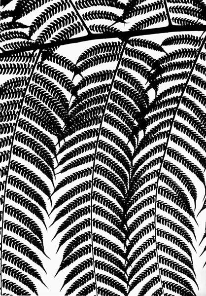 New_Web_Botanicals_006.jpg