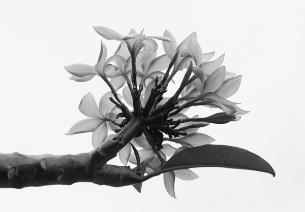 Bouquet,CesarBarroso.jpg