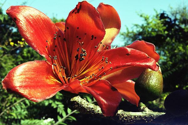Red Flower, 2010