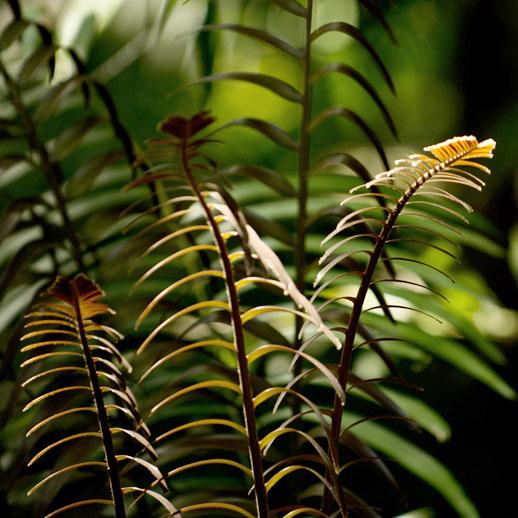 CesarsPhotos_Greynolds_Botanicals_001_LowRes.jpg