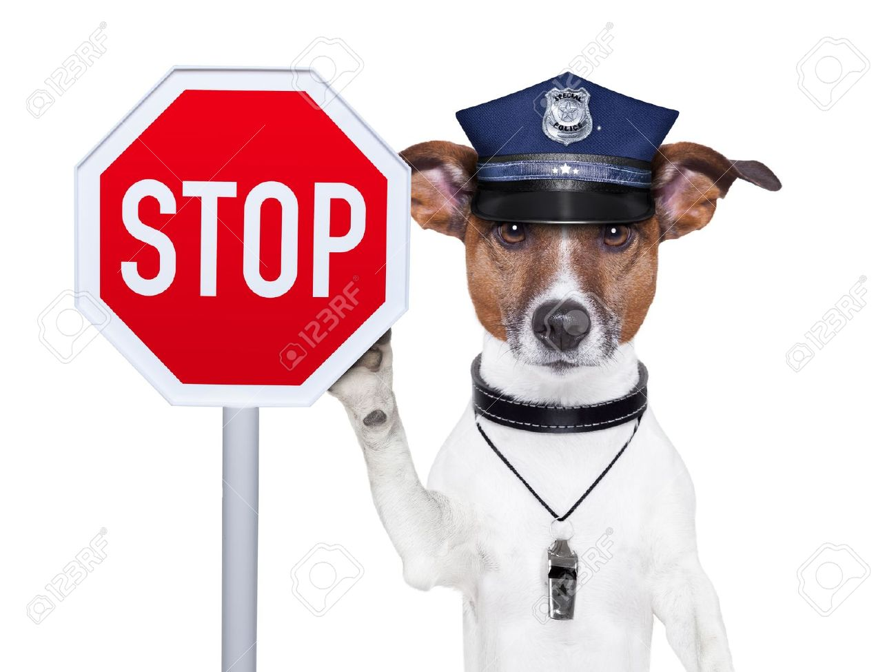 16839357-police-dog-with-a-street-stop-sign-stock-photo.jpg