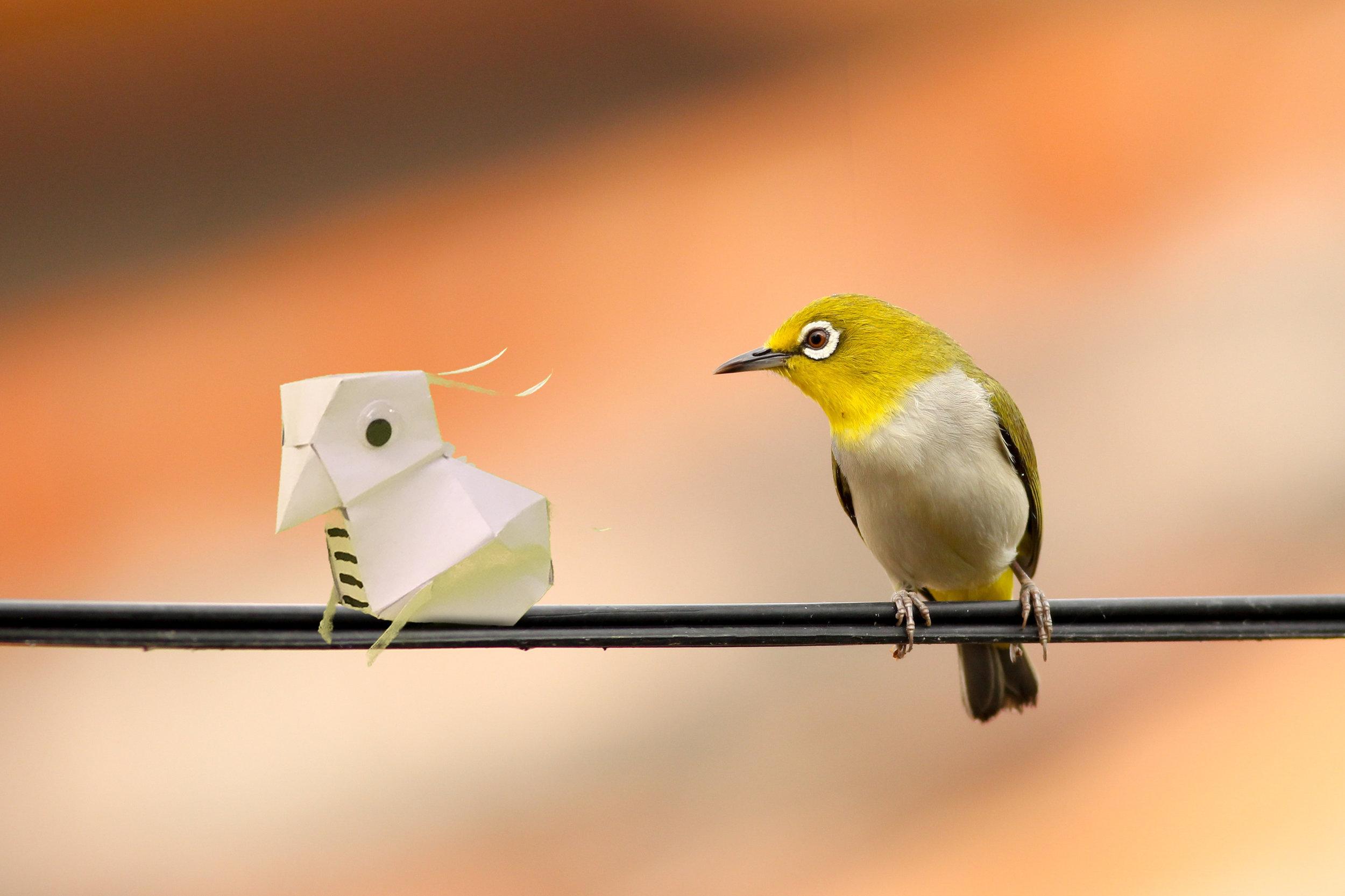 two bird.jpg