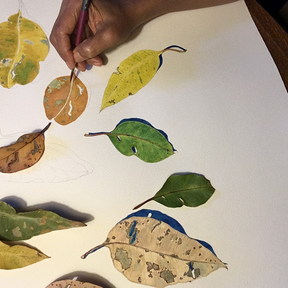Native Flower Watercolour Painting - Paint plants, seeds, pods and flowers with local artist Sarah Thornton Smith. Sarah will show you how to draw, mix and apply watercolour paint in this free drop-in workshop. You'll have the opportunity to paint your own A6 artwork which will be pinned up on display with the rest of the community's interpretations.FREE