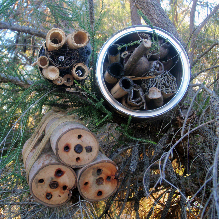 Bee Hotels - Join Environmentalist Cathy Levett to learn about our native pollinators and the important role they play for WA wildflowers. Create a simple native bee hotel from recycled materials.11am - 1pmFREE