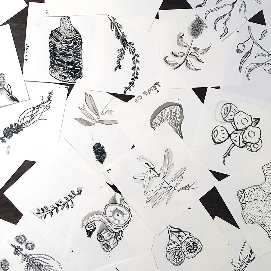 Native Flower Drawing Display - See the creative efforts of Maylands Peninsula Primary's Year 5 and 6 in this Seed Pods inspired watercolour painting display.FREE