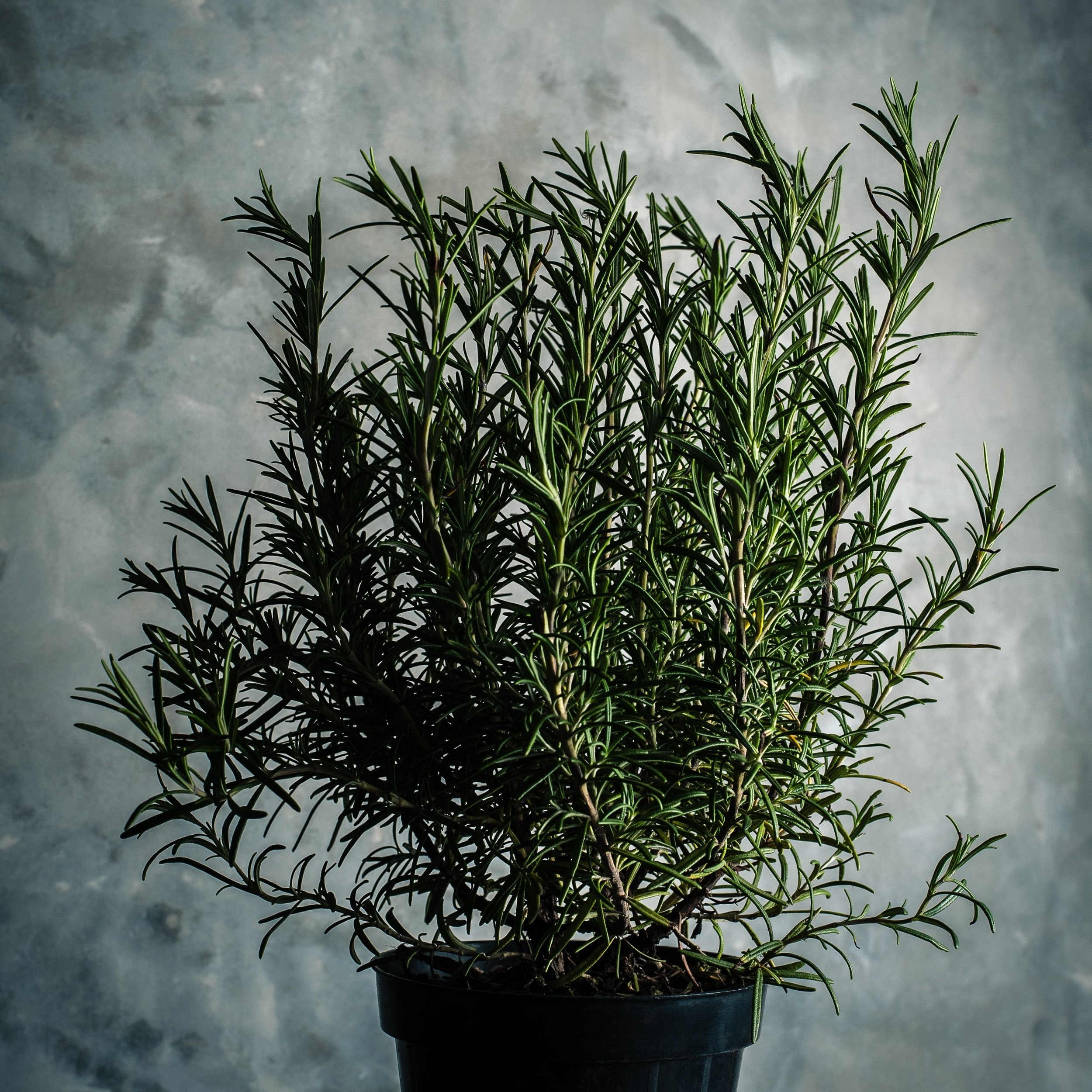 Plants for sale - We have a selection of plants and trees for sale from Tass 1 Trees