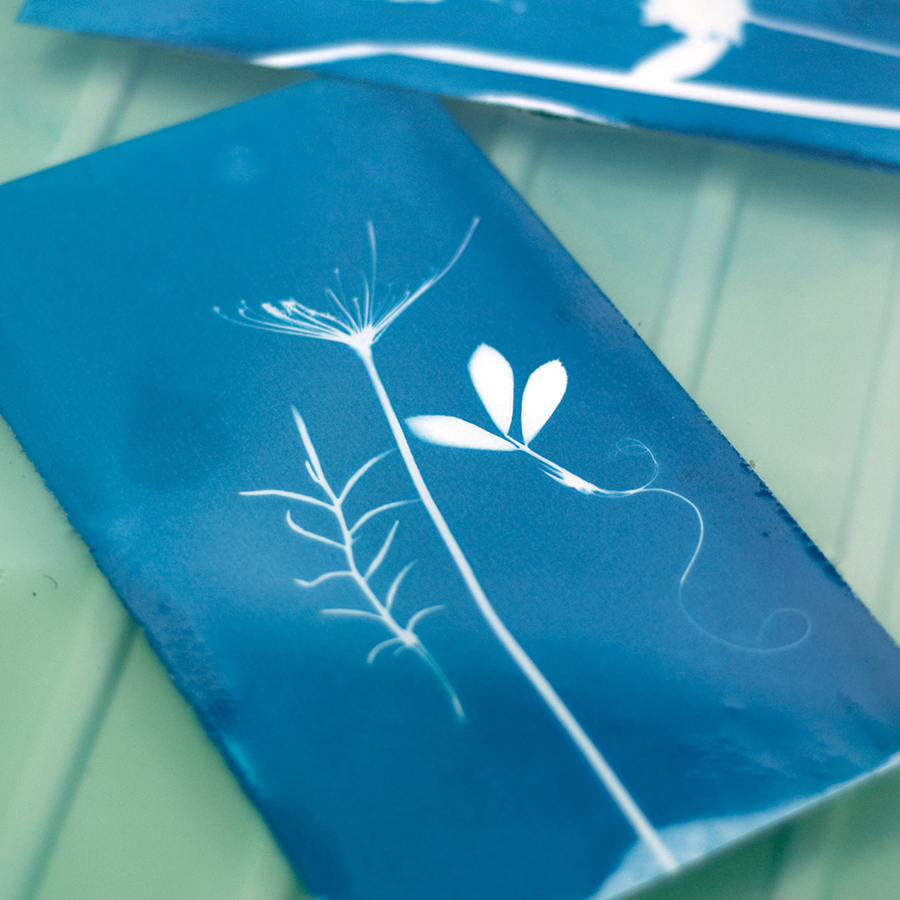 Sun Prints with Phoebe Todd-Parrish - Use the power of the Sun's rays to make your own blue and white plant prints. Local printmaker Phoebe Todd-Parrish will introduce the method of solarfast dyeing to make easy stencil artworks out in the sun.Thur 3 Oct10am - 12pm$25 | $22.50 Members