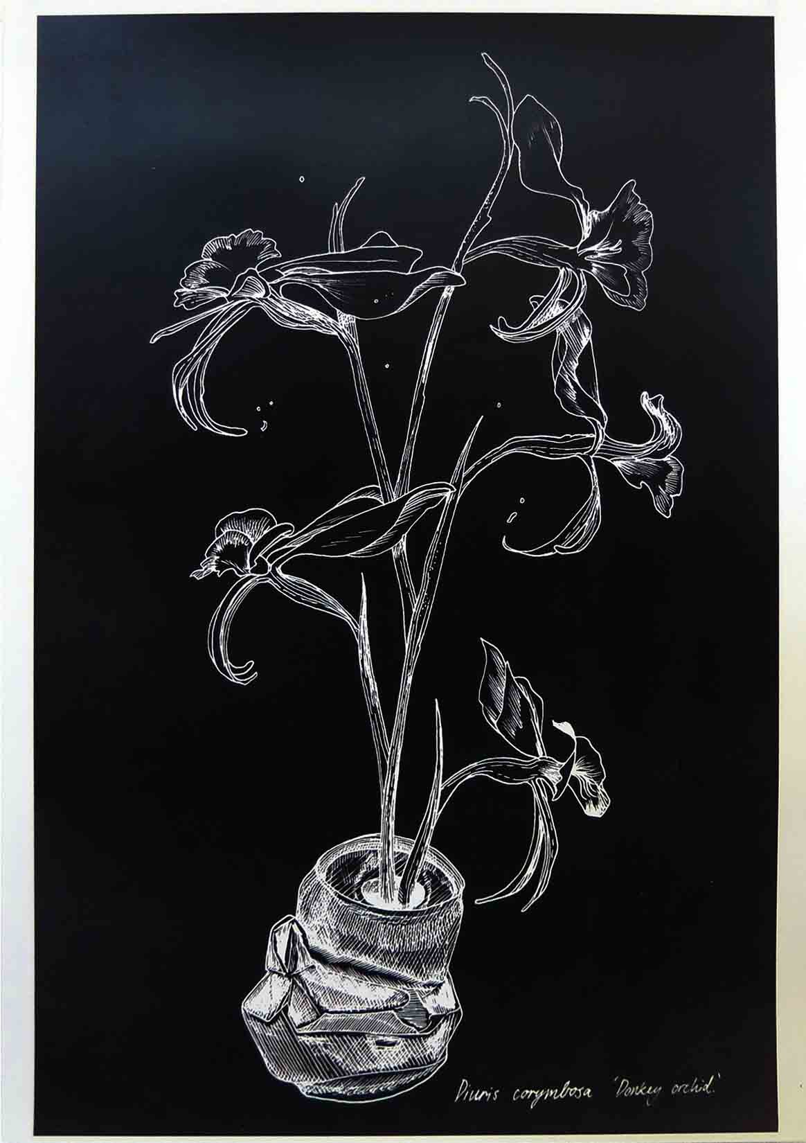 7. Jack Bromell Donkey Orchid growing out of a tinny #2, 2019 digital print 42 x 30 cm $50
