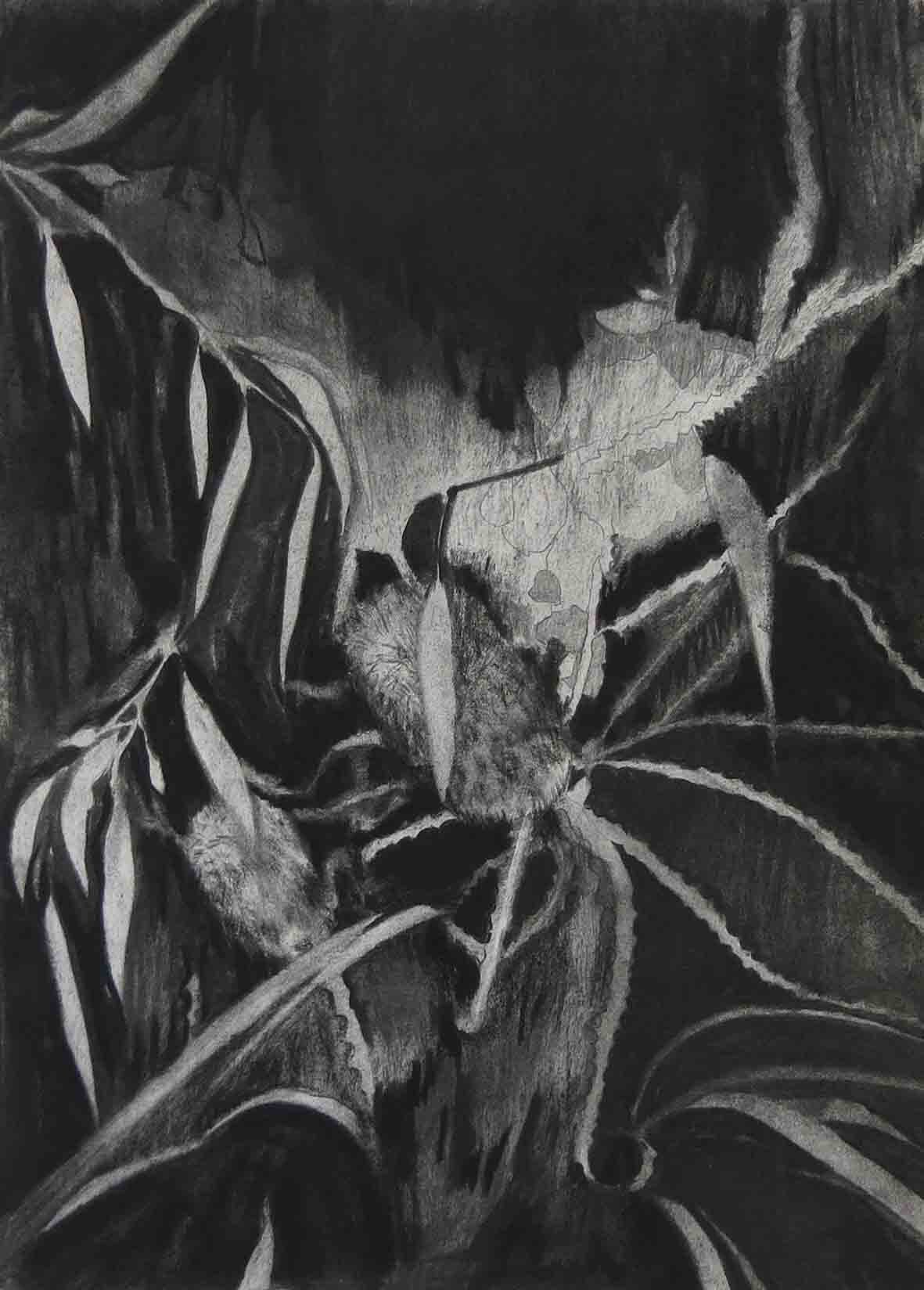 11. Fiona Harman, Banksia, 2019, charcoal, graphite and ink on paper, 42 x 29.5 cm $165