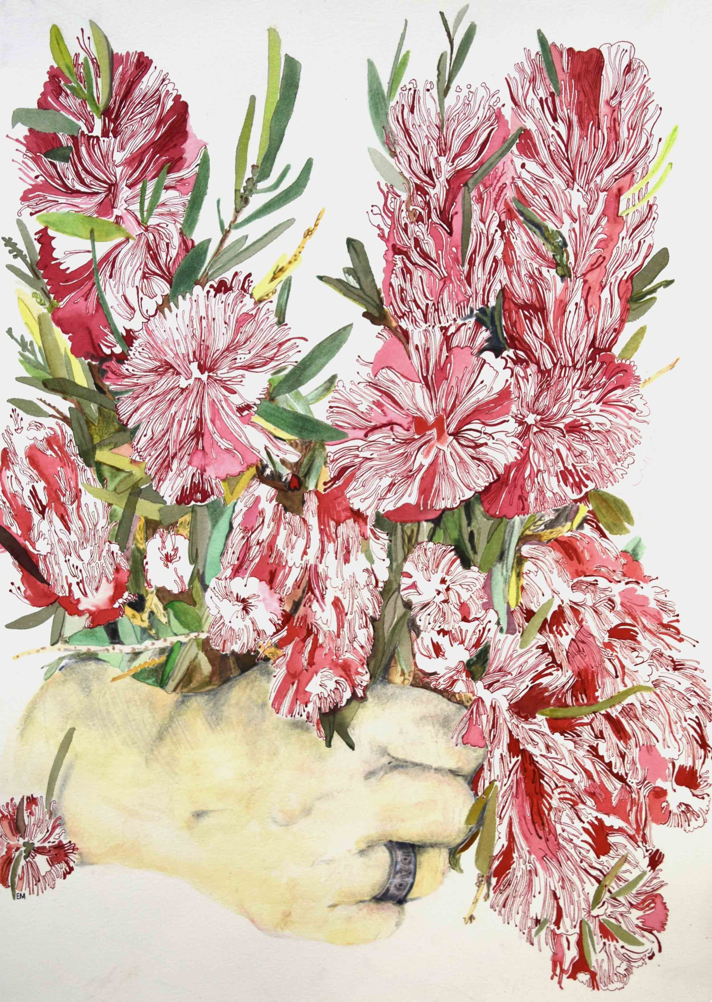 18. Elizabeth Marpole, Steal Life Bouquet of Red Bottlebrushes, 2019, pencil, water colour, ink on paper, 42 x 29.7 cm $270