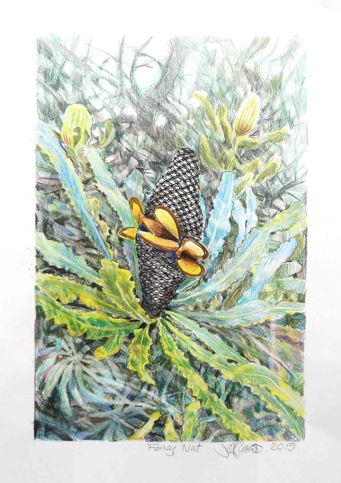 22. Judith Forrest, Fancy Nut, 2019, mixed media on paper, 42.5 x 29.5 cm $300