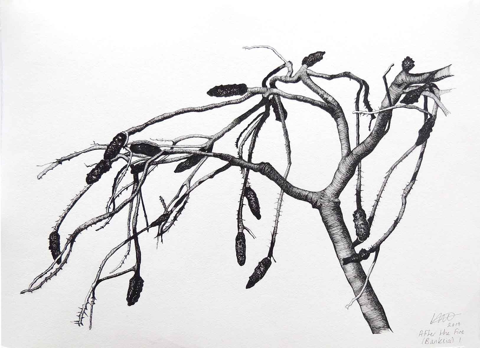 28. Angela McHarrie, After the Fire (Banksia) I, 2019, ink on Hahnemuhle paper, 30 x 42 cm $330