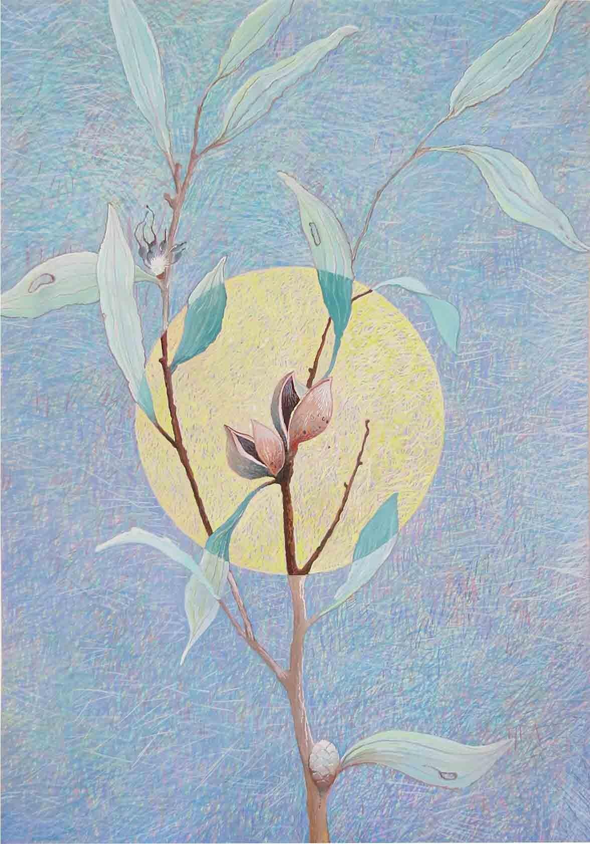 47. Peter Dailey, Pincushion Hakea, 2019, gouache on paper, 42 x 29.7 cm $350