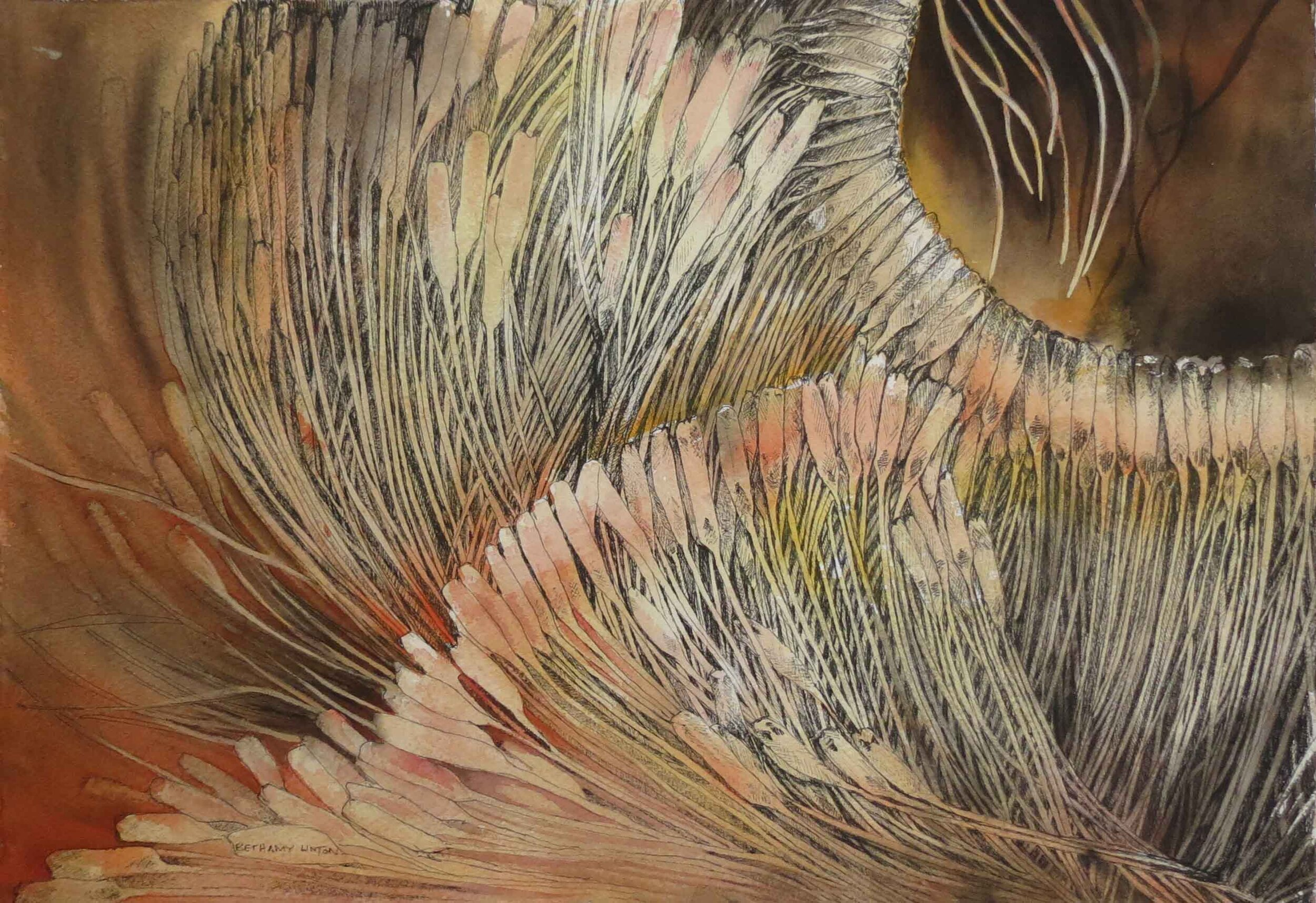 57. Bethamy Linton, Xanthorrhoea, 2019, ink and watercolour wash on watercolour paper, 30 x 42 cm $350