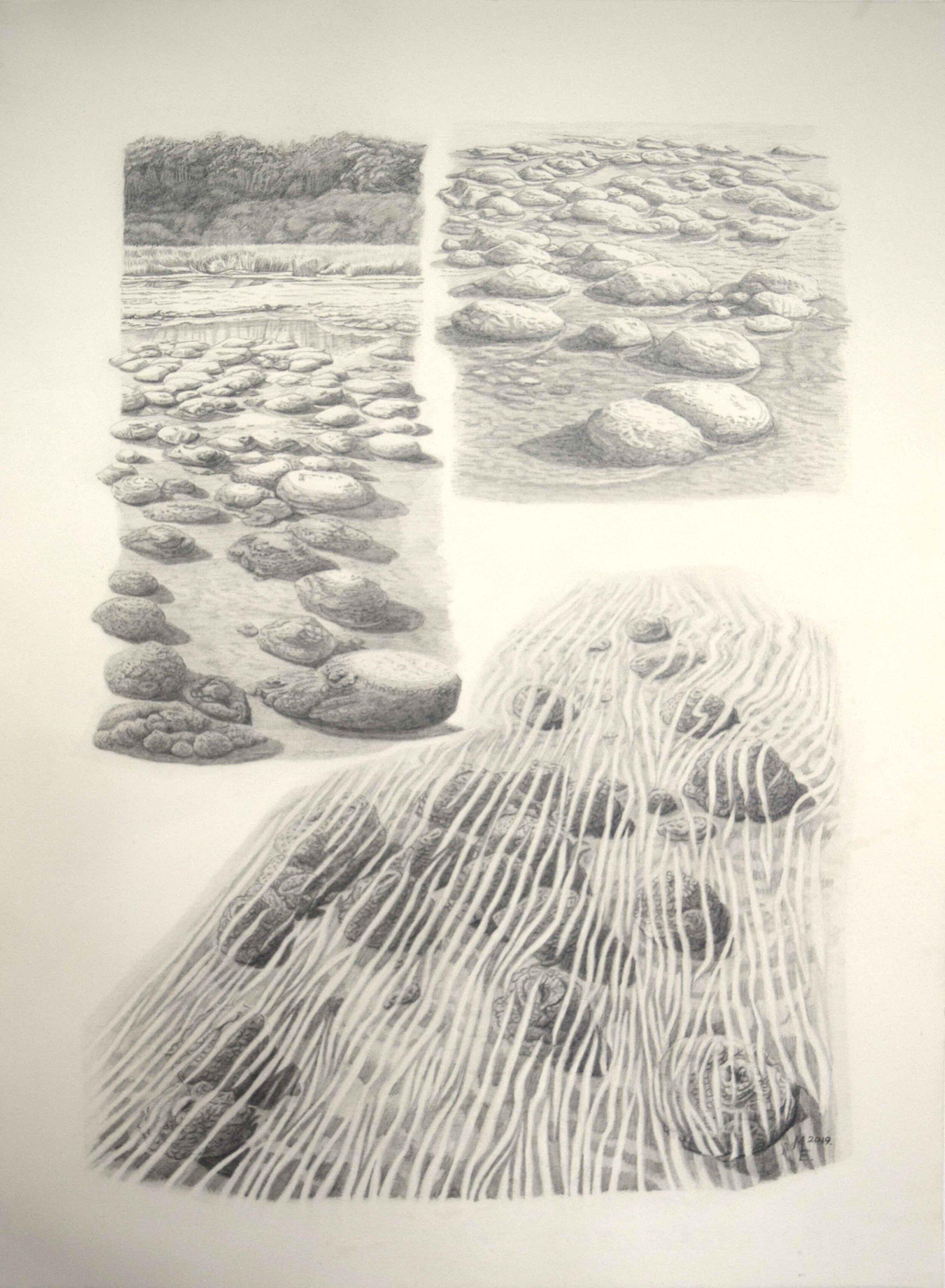 61. Megan Evans, Planimals; Stromatolites and Thrombolites of Lake Clifton and Lake Preston, Western Australia, 2019, pencil on 185gsm watercolour paper, 42 x 28 cm $450