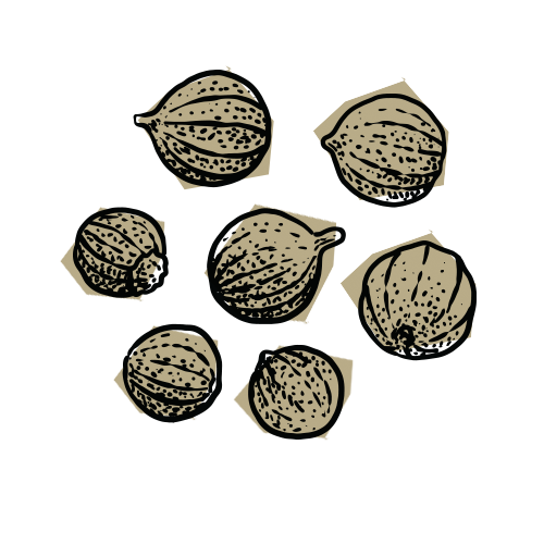 Mayfield-gin-botanical-coriander-seeds.png
