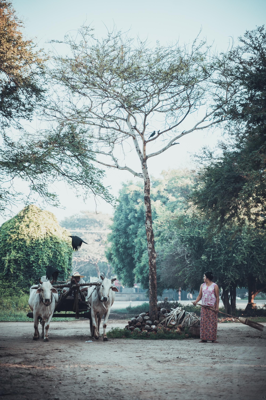 Myanmar-125.jpg