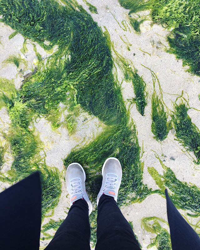 Inspiration du jour 🌿🦚 #irlande #connemara #inspiration #green #artvegetal #instart