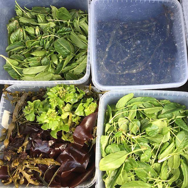 Allskonar gúmmelaði af eyjunni! . . Good day to forage! . . #slippurinn #vestmannaeyjar #veitingageirinn