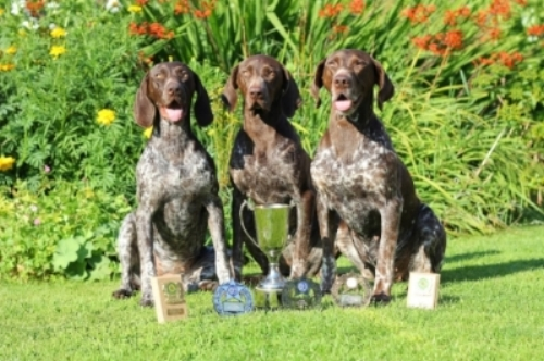 Dora on left at 1 year old after winning at Norwich & District Wildfowlers WT
