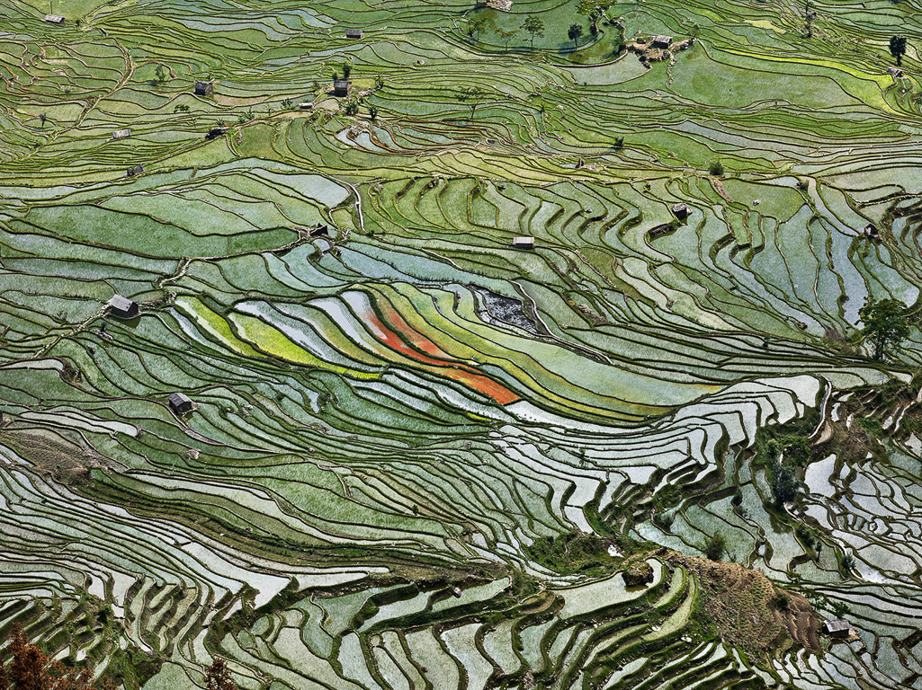 Rice Terraces #2  Western Yunnan Province, China, 2012