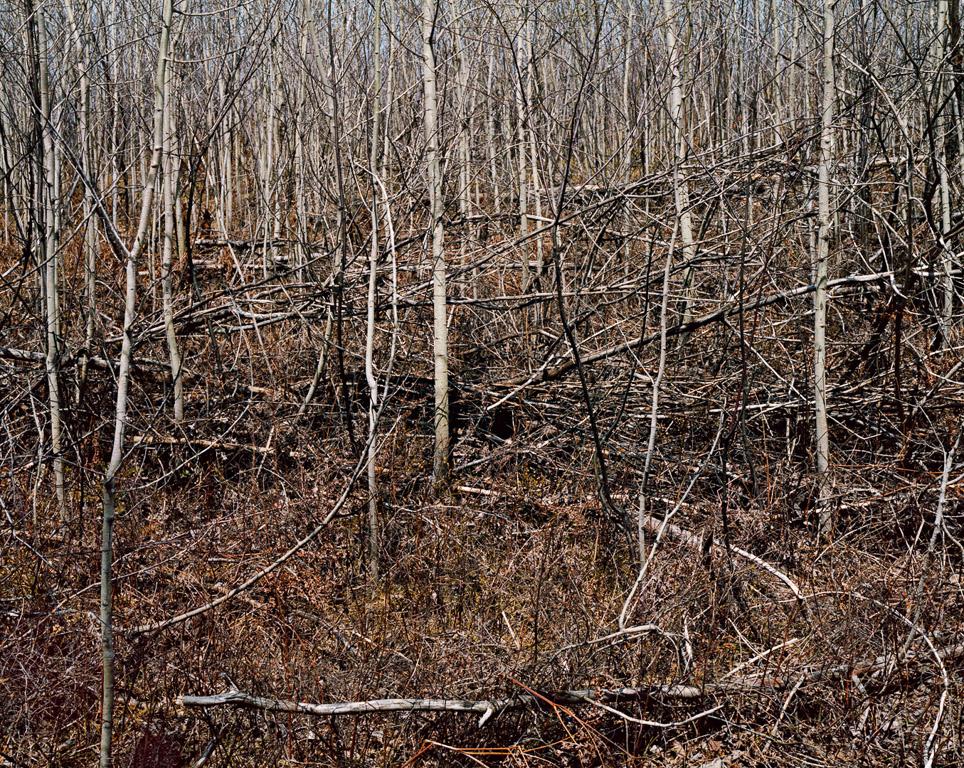 Landscape Study #3  Ontario, Canada, 1981